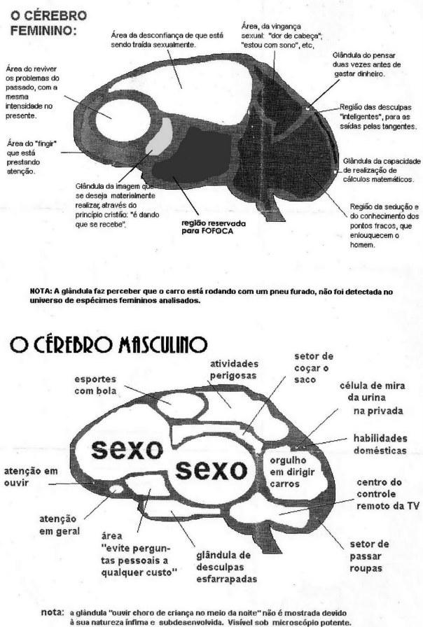 Documento raríssimo com o comparativo do cérebro humano em Homens e Mulheres