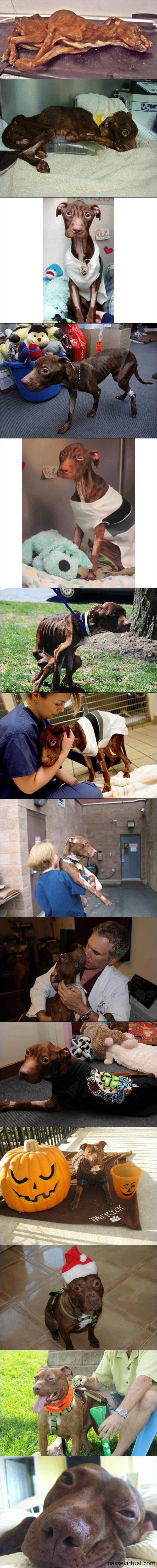 A emocionante história do pitbull Patrick